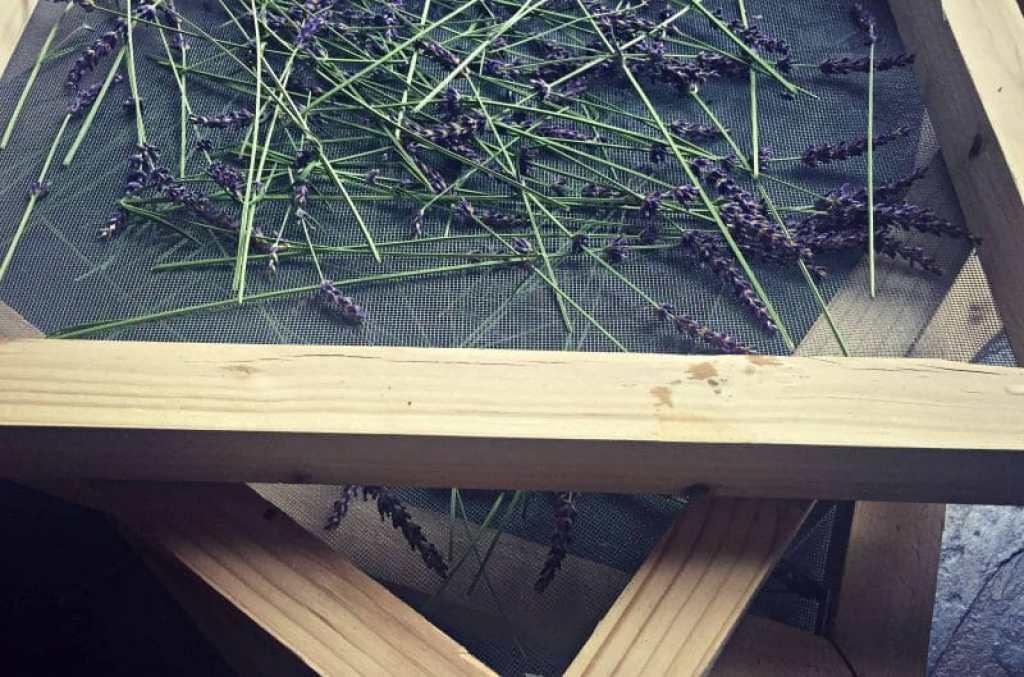herb screens lavender