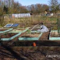 Edible garden in March 2015