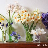 Seasonal flowers: spring bulbs