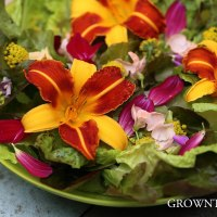 Seasonal salad - edible flowers