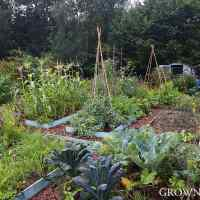 Edible garden in July & August 2015