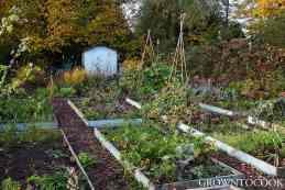 kitchen garden in october