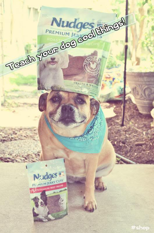 Positive Reinforcement Dog Training with Nudges!