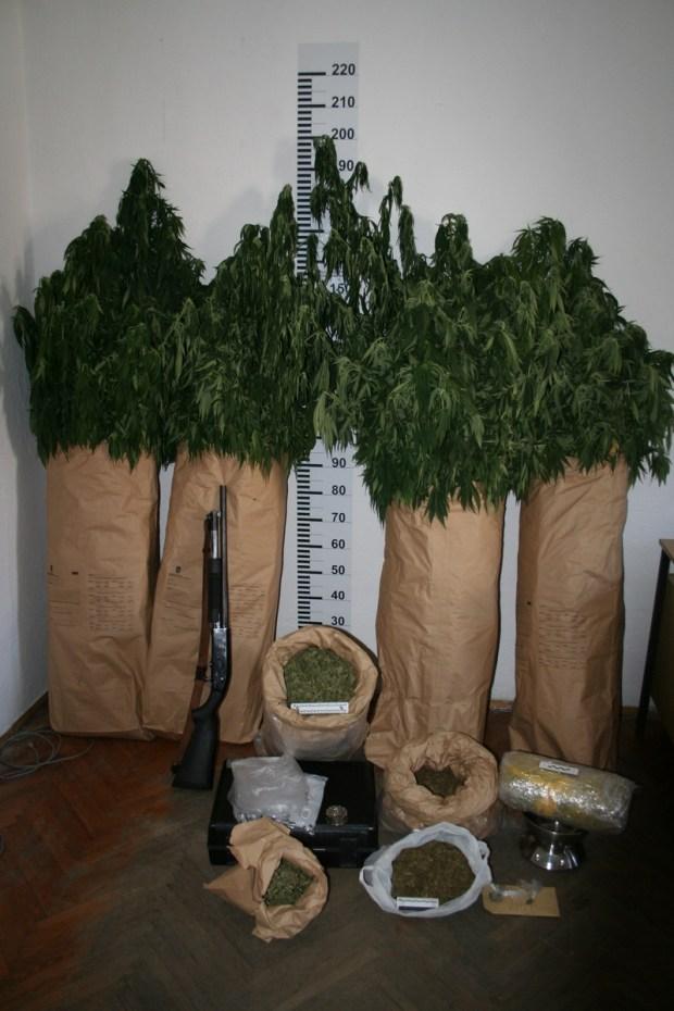 pronađene-32-stabljike-i-usitnjena-marihuana-5-kg-mediji