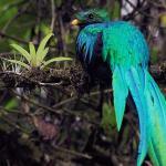 """El Origen del Quetzal """"La Leyenda de Kukul 1"""""""