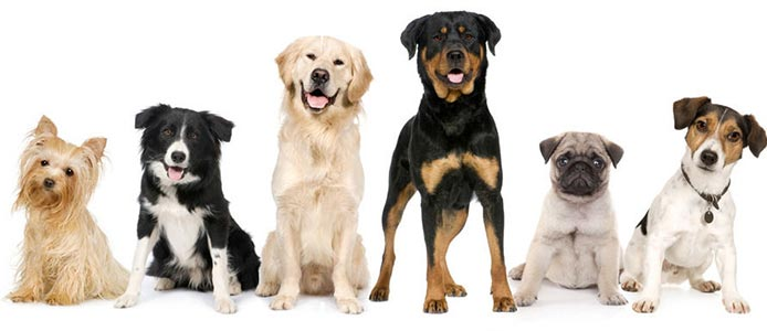 Tabela de Preços das Raças de Cães
