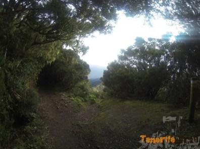 Sendero PR 2 cerca de Pico del Inglés desvio dirección a Los Catalanes