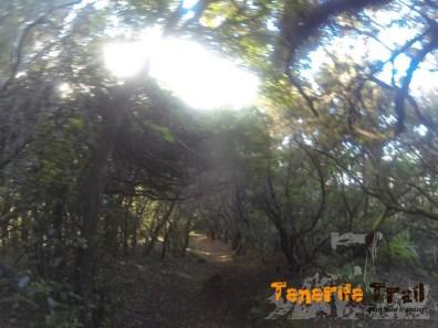 Inicio sendero y bajada hacía San Andrés (sendero a tu derecha)