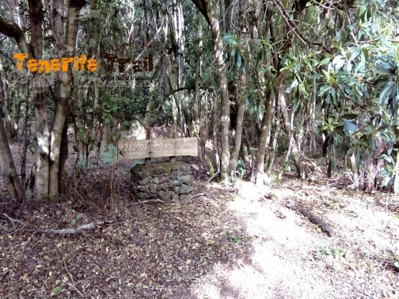 Bosque de Los Sanguinos (donde damos una vuelta a su Caldera)