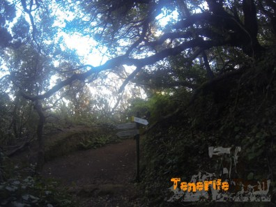 Llegada al cruce con el sendero de Las Vueltas a la izquierda a la Casa Forestal
