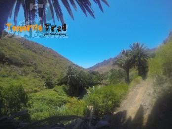 Palmeral en el Valle del Cercado