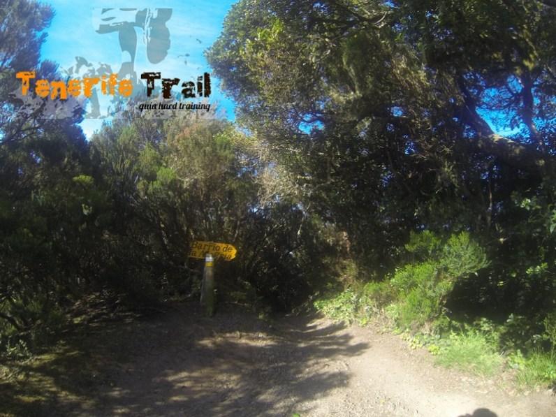 Punto de encuentro con el PR TF 2 (Valleseco-Pico del Inglés)