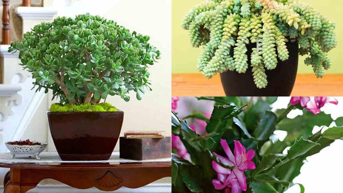 8 piante grasse molto decorative e ideali per la coltivazione indoor
