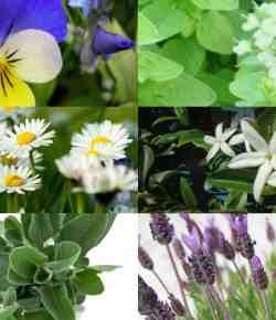 14 piante con cui realizzare ottimi e benefici infusi
