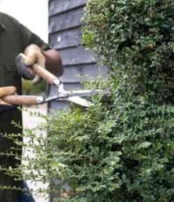 Giardinaggio creativo: come trasformare un semplice arbusto in una topiaria