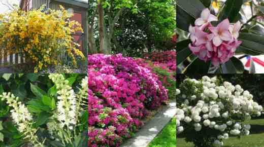 12 arbusti ideali per la coltivazione in ombra