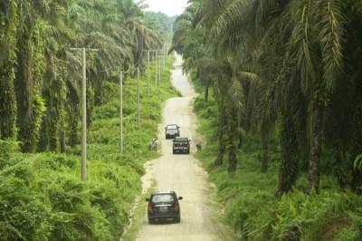 Pembangunan Jalan Khusus Untuk Usaha Perkebunan