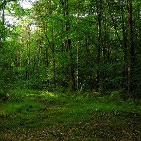 Urgensitas Izin Pinjam Pakai Kawasan Hutan