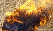 Cilento –Il Parco va a fuoco, decine di roghi e danni