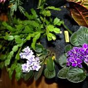 Zoom plantes