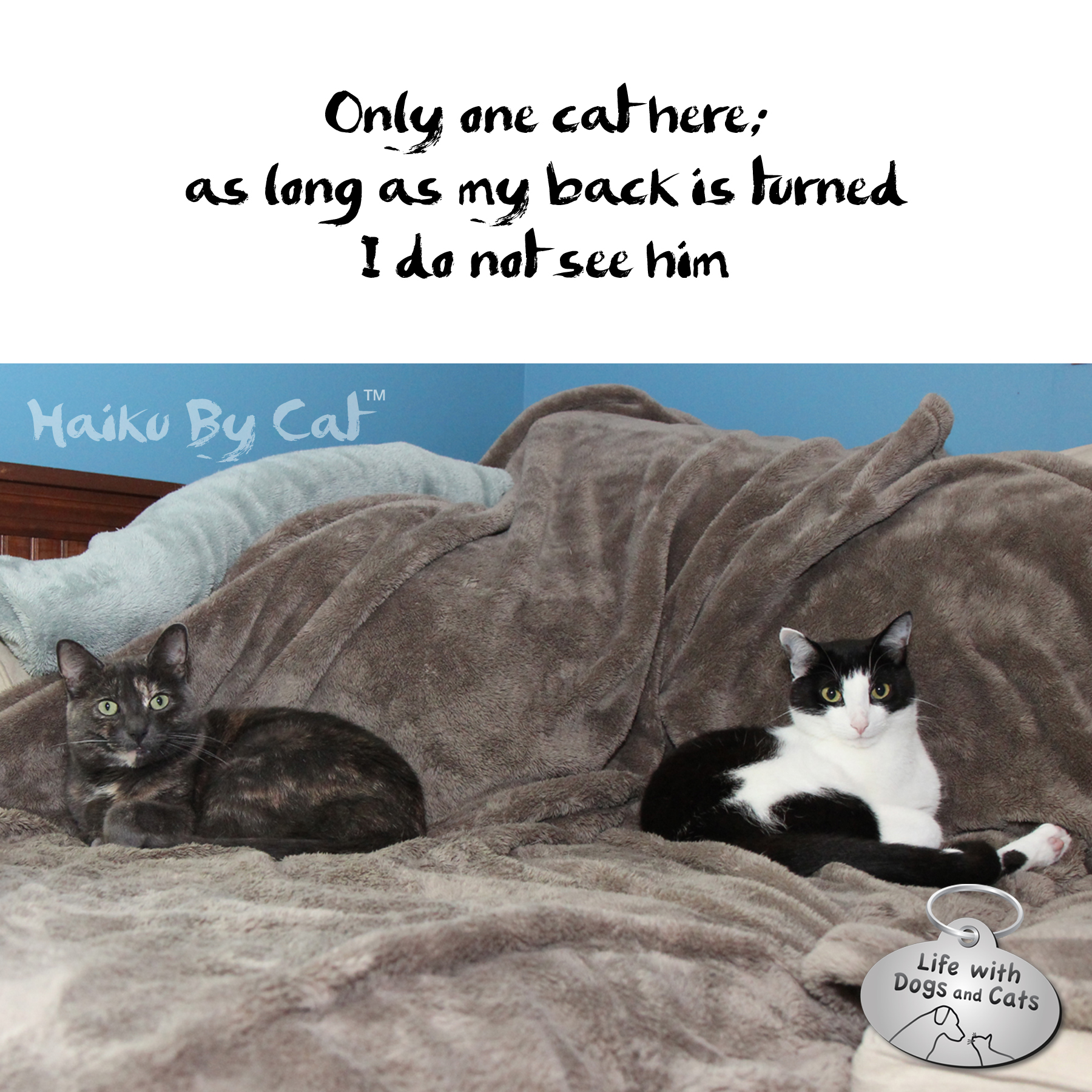 Idyllic Haiku By Cat Life Dogs Blog Dogs Movie Life Haiku By Only One Cat As Long As My Back Is Turned Calvin Archives Page bark post Life With Dogs