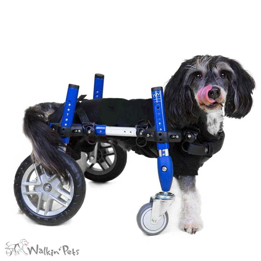 Dark Wheels Fully Supportive Pet Suspenders Suspenders Dog Diapers Handicappedpets Diy Dog Wheelchair Youtube Diy Dog Wheelchair 4 Wheels bark post Diy Dog Wheelchair