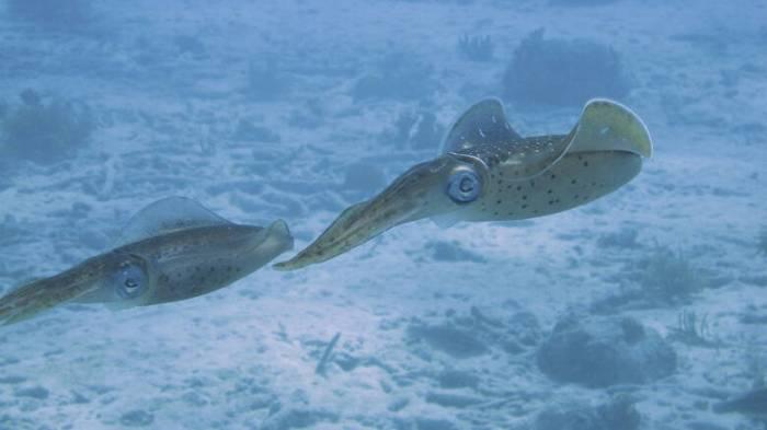 squid-101375_1280