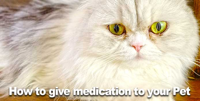 How to give medication to your Dog or Cat