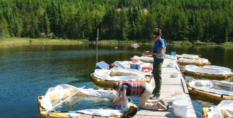 Scientists add nanosilver to mesocosms at the Experimental Lakes Area in August 2012. If the ELA remains closed for the 2013 field season, the next stage of the experiment--the contamination of an entire lake--will be postponed, or cancelled.