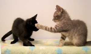 Playful kittens