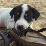 Bad Dogs: Six Ways To Prevent Your Birkenstock's Funeral