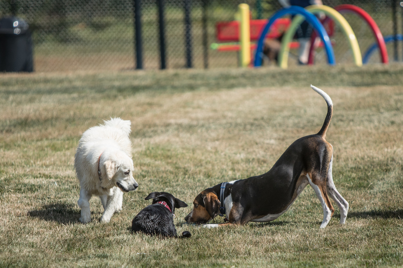 Decent A Play Happy Hounds Playground Photo Gallery Dog Doesn T Play Bow Teach Dog Play Bow A Example bark post Dog Play Bow