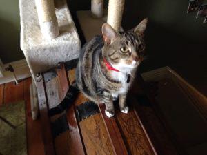 Cat Sitter Jesmond