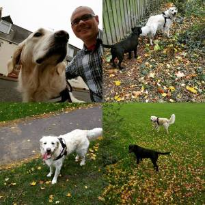 Recommended dog walker newcastle