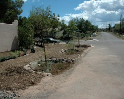 Figure 2. Water-harvesting eddy basins created by Eden on Earth on a curbless street in Clarkdale, Arizona. Before the work, road runoff would flow up against and flood the house. After the work, the dirt dug from the street-side basins created a raised walkway that acts as a berm ensuring no basin water or street runoff can flow up against the house. Before the work, there was no walkway; now there is a wonderful path wide enough for two people to walk side by side, separated by the trees from cars and street. Now the trees have grown to shade both walkway and street. Photo taken by Carol Luhman just after the work was completed in 2007.