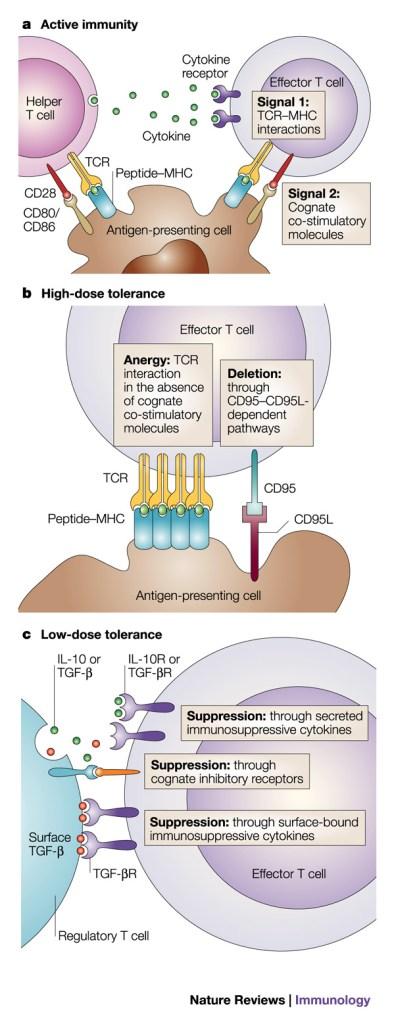OralTolerance Clinical Pearl