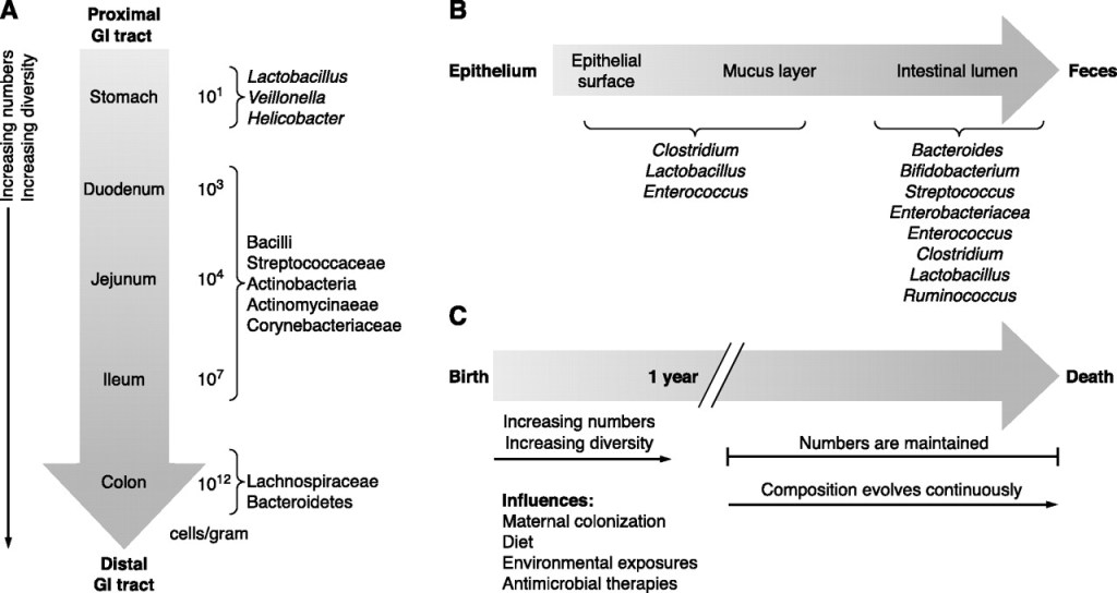 Microbiome Species