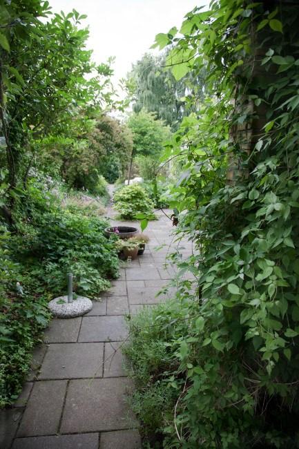 tørketålende have