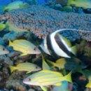 New hypothesis explains acidification effect