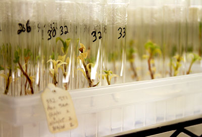 Vials of plant species in laboratory