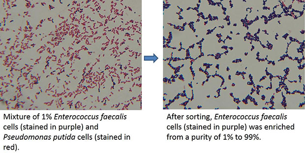 Cell sorting: Before and after
