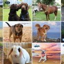 Pick up a UH Alumni pet calendar
