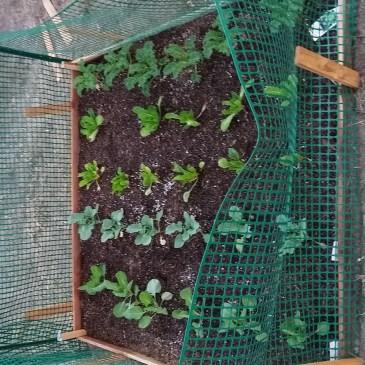Tiny House-Tiny Garden!