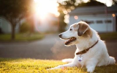 Cute Dog Animal in Garden HD Wallpapers | HD Wallpapers
