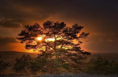 Sunset Behind Tree | HD Wallpapers