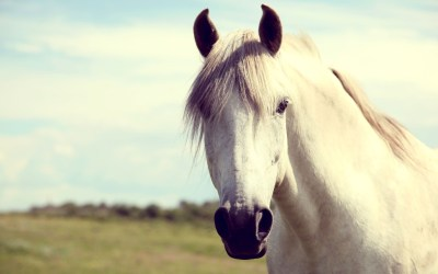 White Horse Wallpapers, Pictures, Images