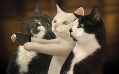 Funny Cat Backgrounds, Pictures, Images