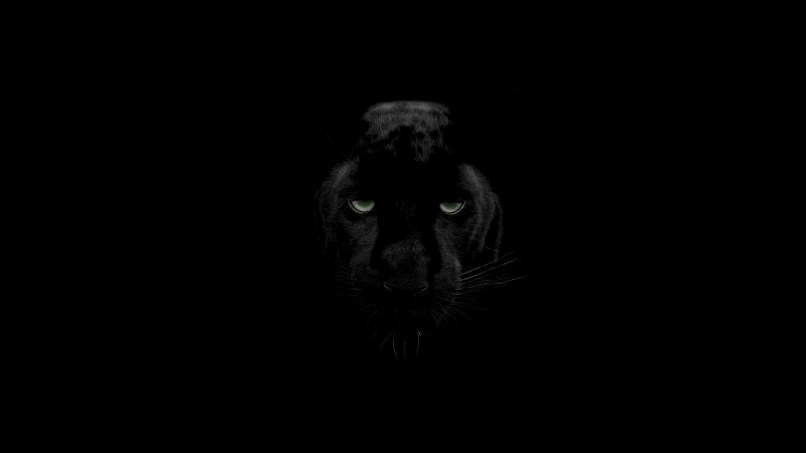 black panther hd wallpapers 4k