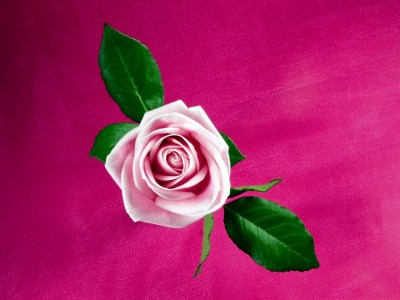 Cool Pink Rose Wallpapers | HD Wallpapers | ID #9442