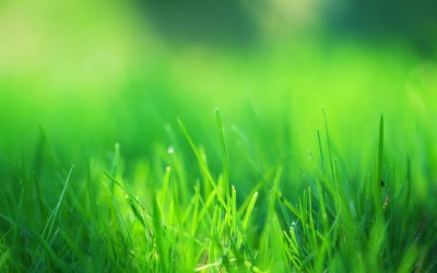 Green Grass Field Wallpapers | HD Wallpapers | ID #14660